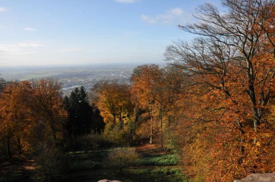 20141108 - 134 - 20 ans Ilvesheim - Visite site Heiligenberg