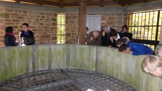 20141108 - 185 - 20 ans Ilvesheim - Visite site Heiligenberg