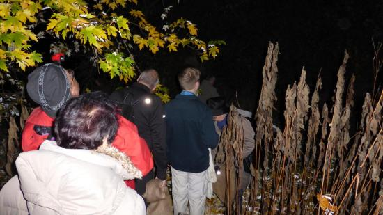 20141108 - 285 - 20 ans Ilvesheim -Chasse à l'Ilwedritsch